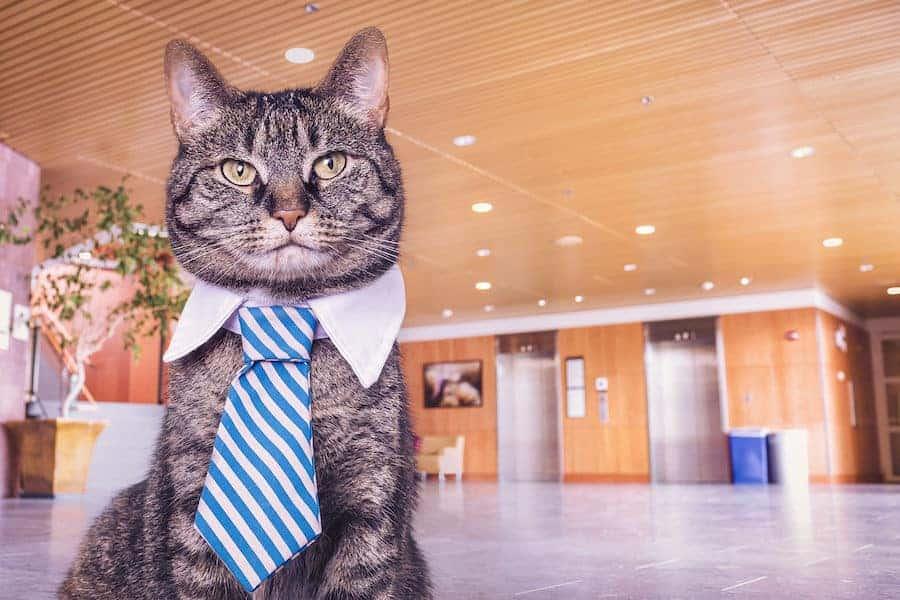 Arkansas Small Business Owner as a Cat