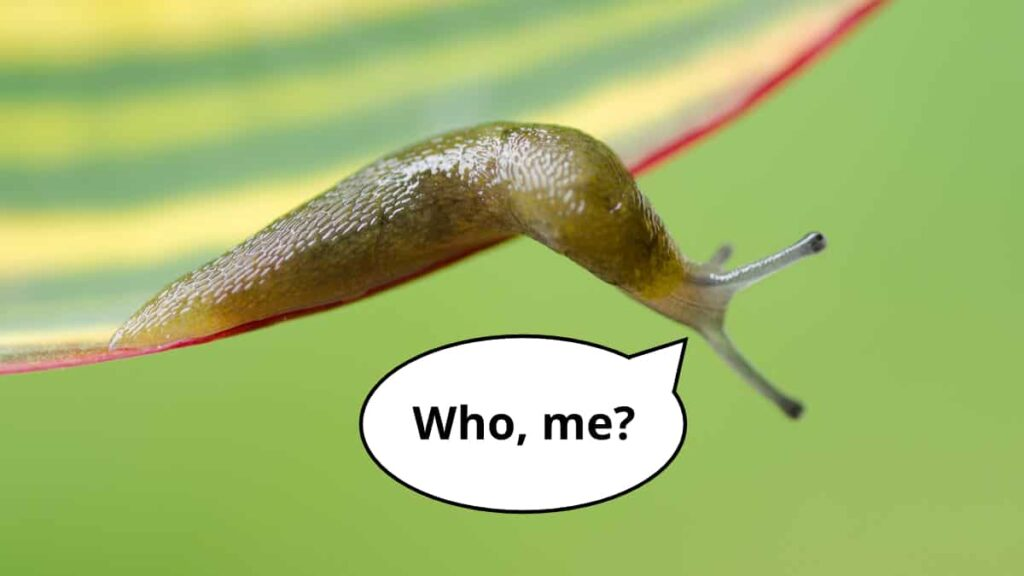 "A slug hanging from a plant with a speech bubble, ""Who, me?"""